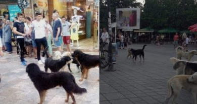 Охрид полн со туристи, но и со глутници бездомни кучиња: Општинските власти немаат решение за проблемот